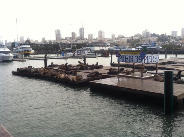 Seals Pier 39 (2)
